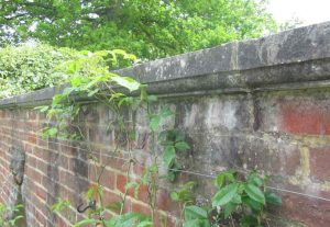 Weathered concrete coping stone work in an old garden