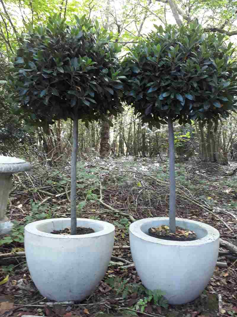 Super Seven – The Best Trees to Pot for Autumn