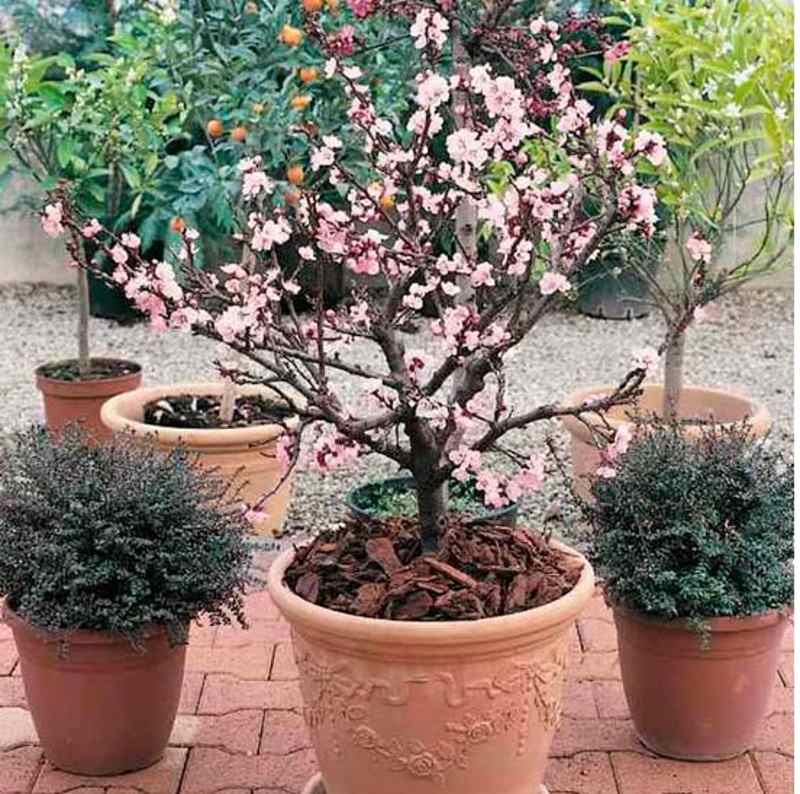Super Seven The Best Trees To Pot For Autumnchilstone