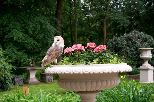 Owls Take to Chilstone