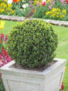 Stone planters at Kensington Palace