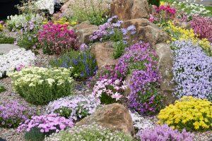 bright-planting-garden-trends