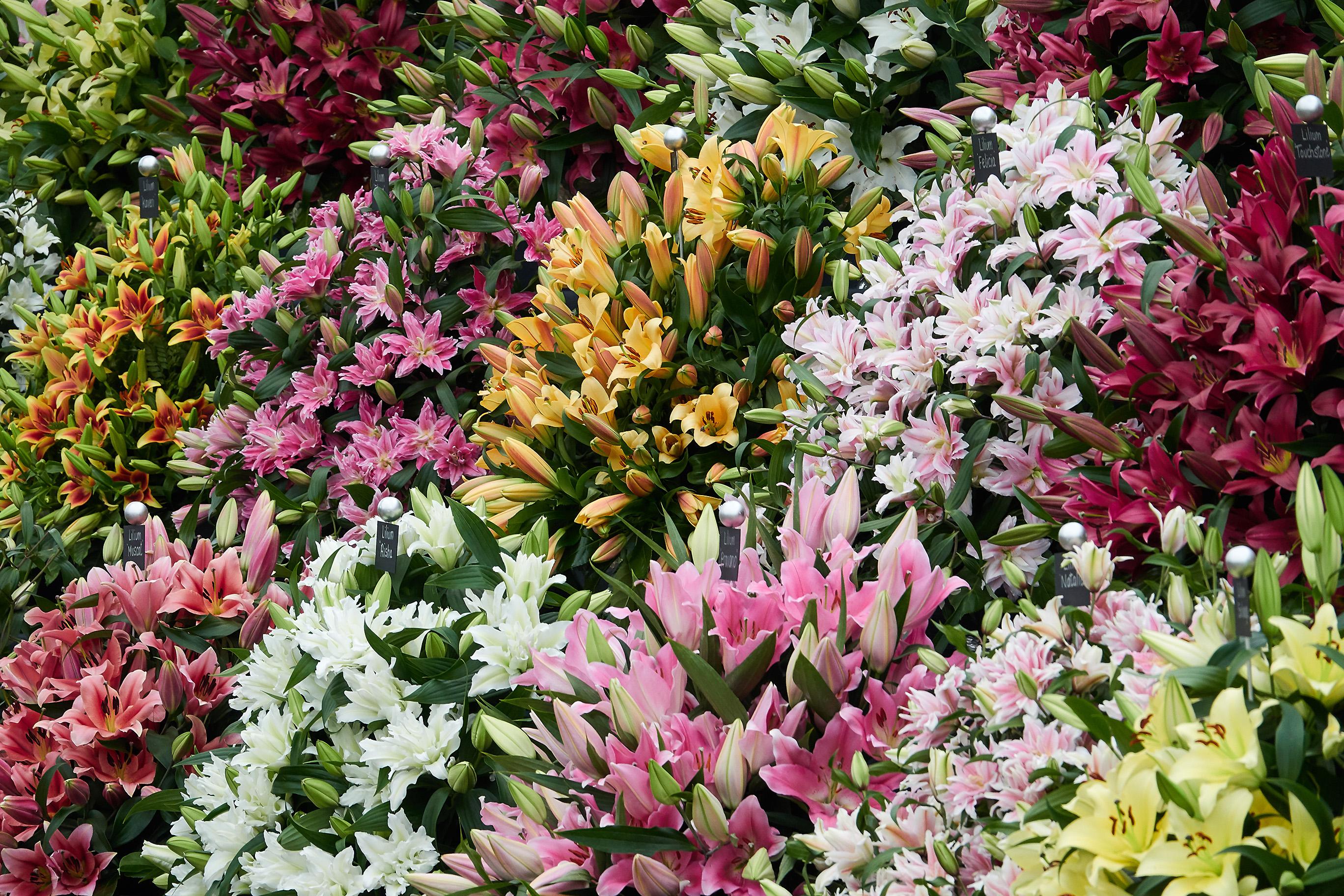 bright-flowers-chelsea-flower-show-2018