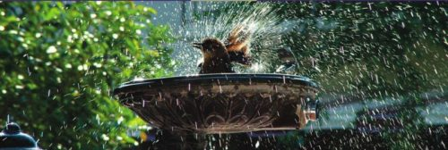 Protecting Garden Wildlife in a Heatwave