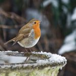 65 Day Sale – Week 8 Brilliant Birdbaths