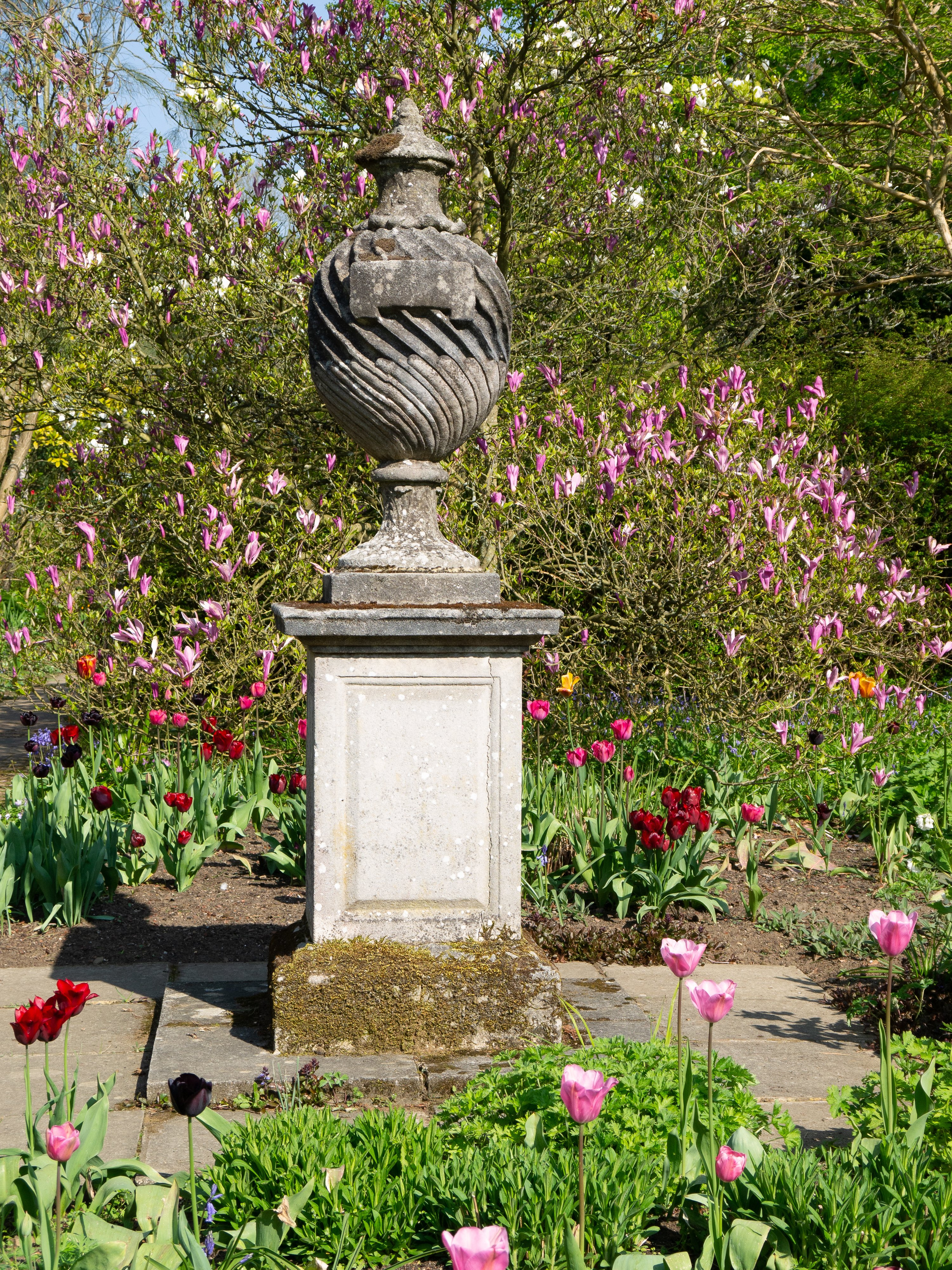 Pope's Garden Urn and pedestal amongst magnolia and tulips at Great Comp Garden