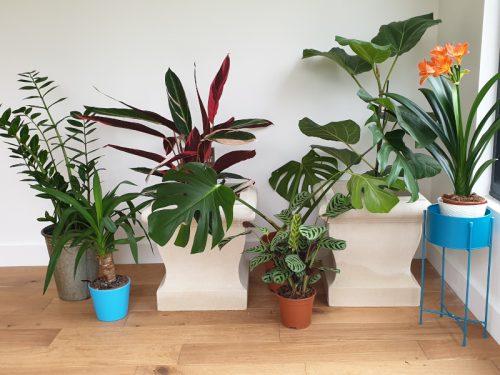 Indoor Gardening Planters