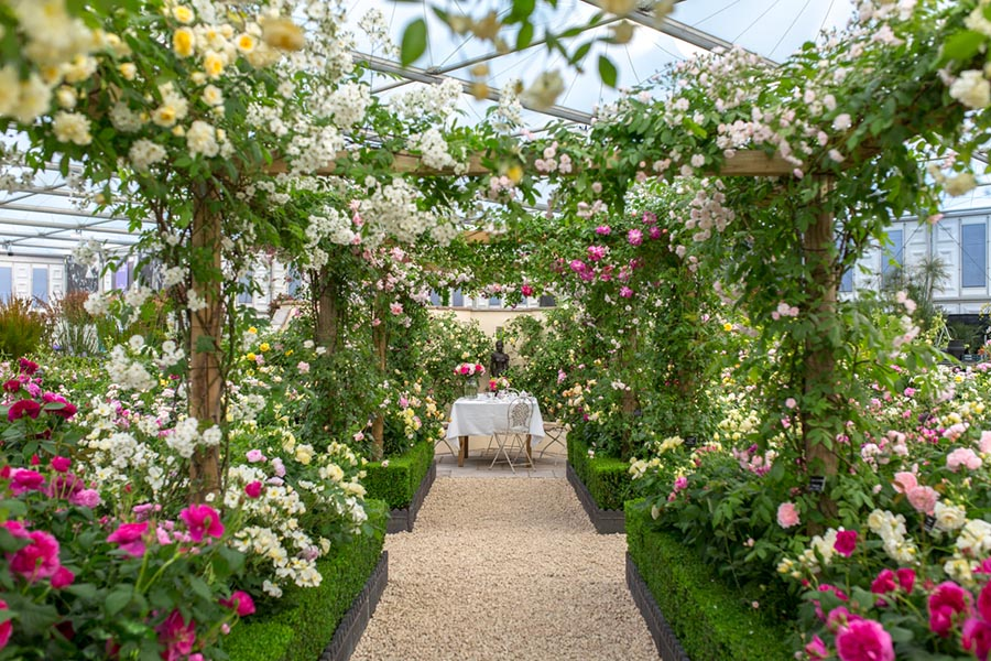 Virtual Chelsea - Flower trends and Beautiful Blooms from the RHS Chelsea  Flower ShowsCHILSTONE